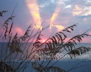 Island Gulf